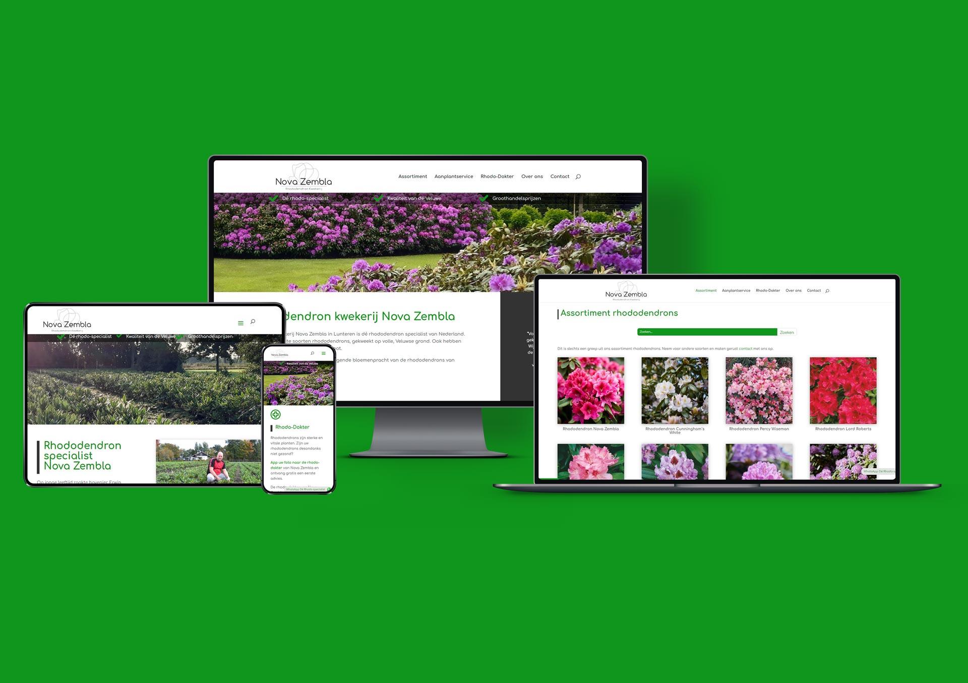 Rhododendron Kwekerij Nova Zembla