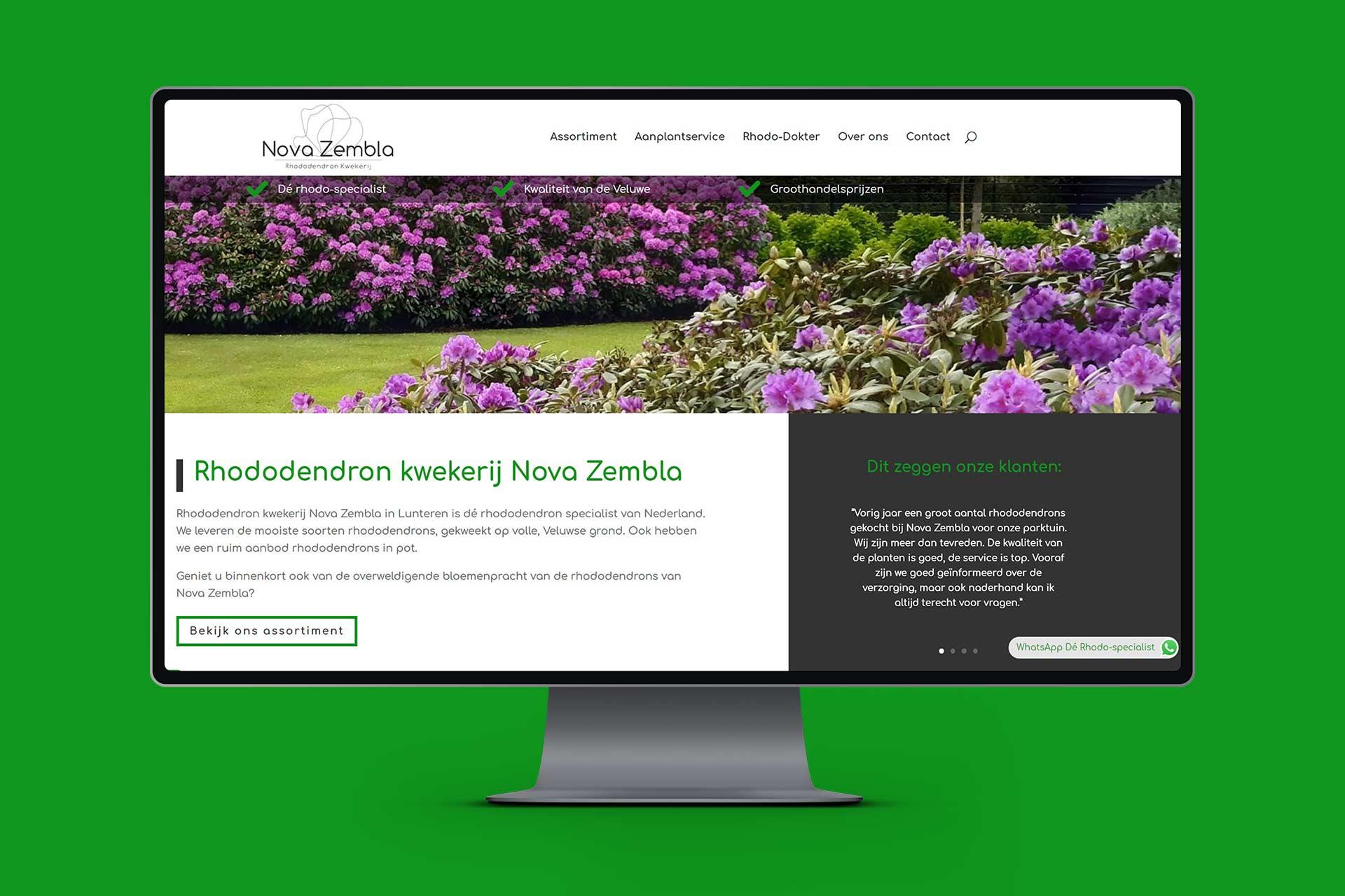Rhododendron kwekerij Nova Zembla 2